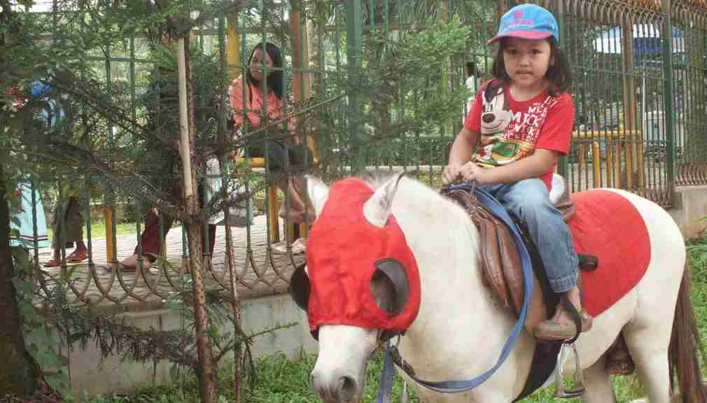 Kuda Tunggang Ragunan