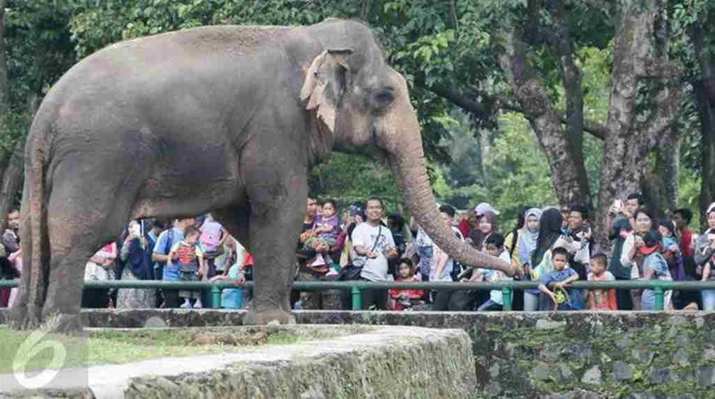 Taman Margasatwa Ragunan