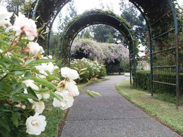 Taman Mawar Taman Bunga Nusantara