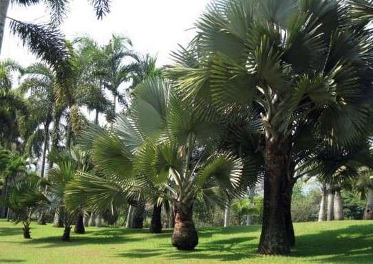Taman Palem Taman Bunga Nusantara