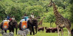 Harga Tiket Masuk Taman Safari Prigen
