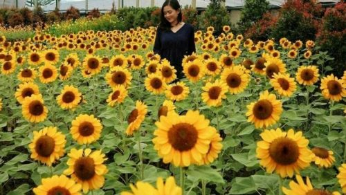 Wahana Taman Matahari