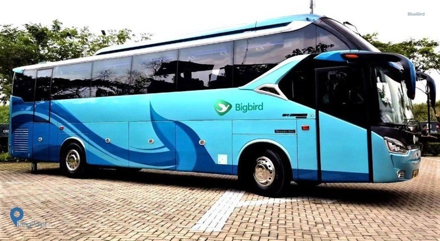 Bus Big Bird